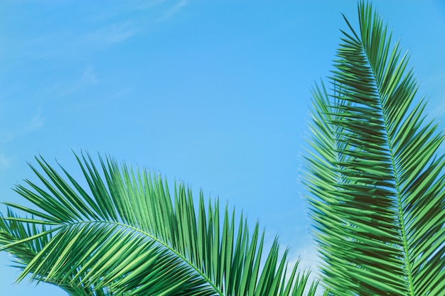 Palm tree leaves under blue sky, Premium Photo