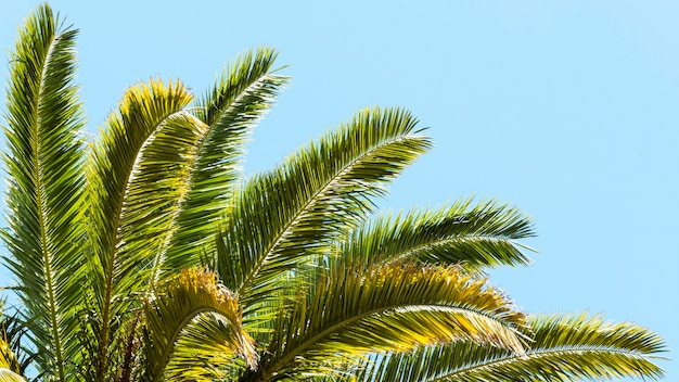 Palm tree leaves outdoors in the sun Free Photo