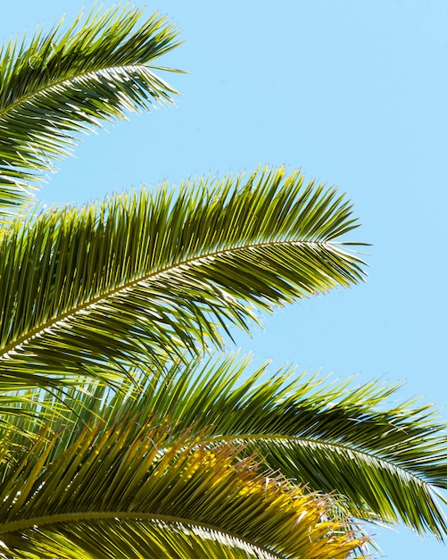 Palm tree leaves outside in the sun Free Photo