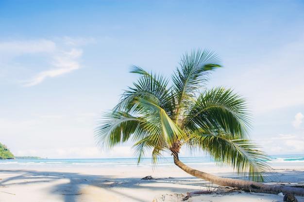 Palm tree on sand beach. Premium Photo