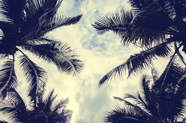 Palm tree seen from below Free Photo