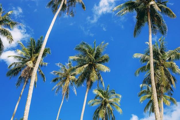Palm tree with beautiful of blue sky. Premium Photo