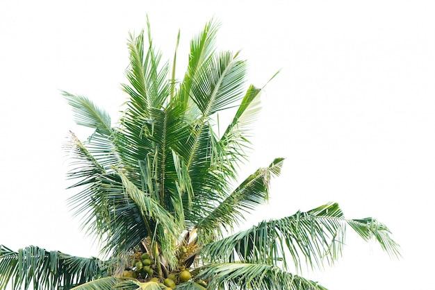 palm tree white - photo #35