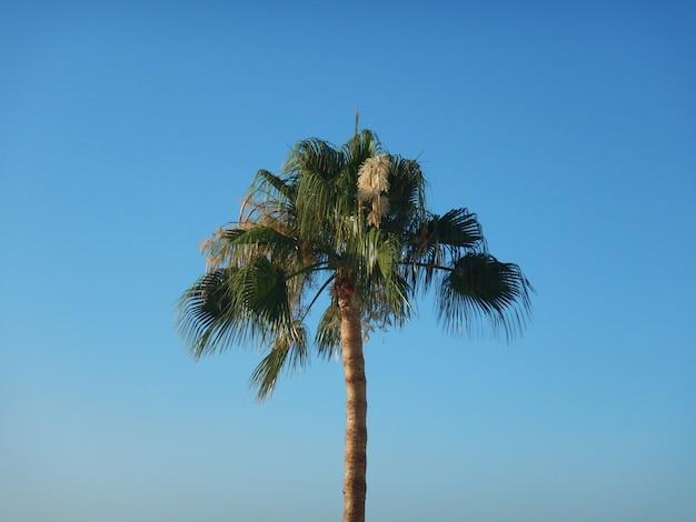 Palm trees on blue skyin summer Premium Photo