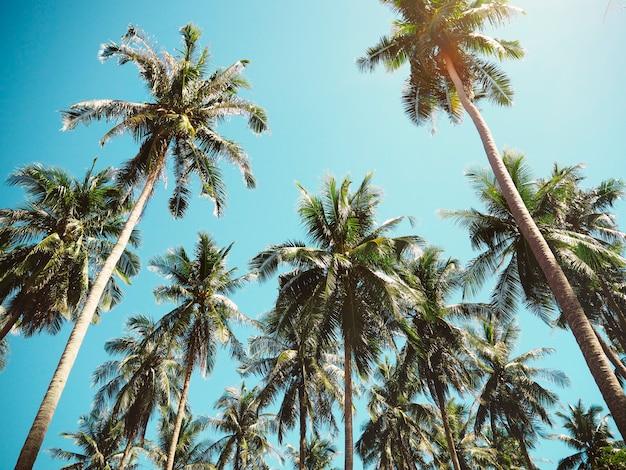 Пальмы летом Бесплатные Фотографии