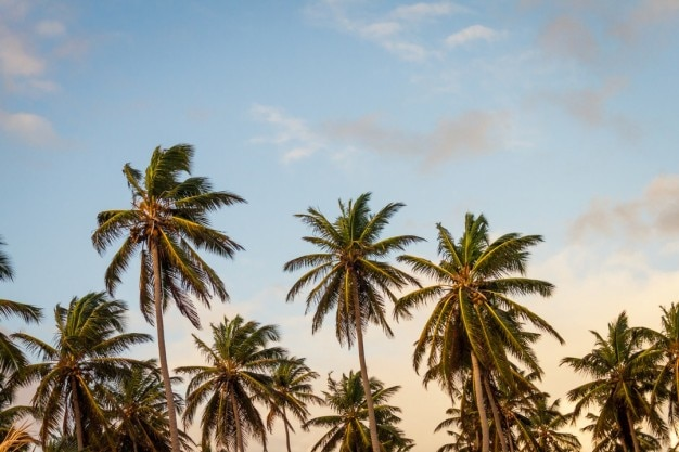 Palm trees and sky Free Photo