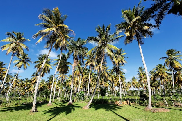 Palm trees in tropical garden in summer Free Photo