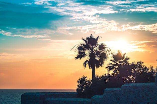Palm trees uder the rays of the colorful sunset. Premium Photo