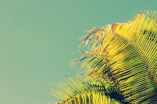 Palm trees vintage Premium Photo