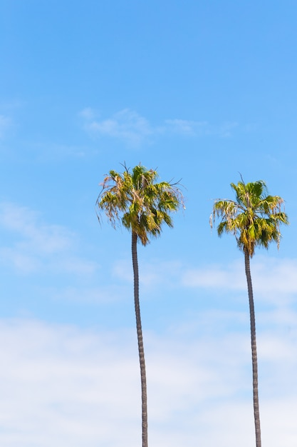 Palm trees Premium Photo