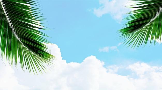Palms coconut leaf on blue sky Premium Photo