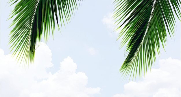 Palms leaf on blue sky with cloud in summer - background Premium Photo
