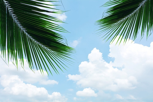 Palms leaf on blue sky with cloud in summer Premium Photo