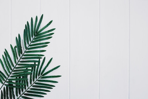 Palms leaves on white wood background with space on the right Free Photo