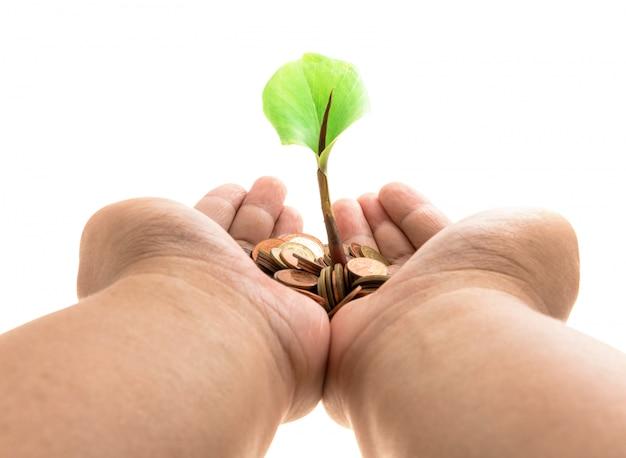 コインの山から育つ木の椰子 Premium写真