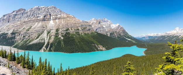 Panarama of lake payto in summer ,sunny dayfrom the top of the hiking trail in alberta, canada Premium Photo