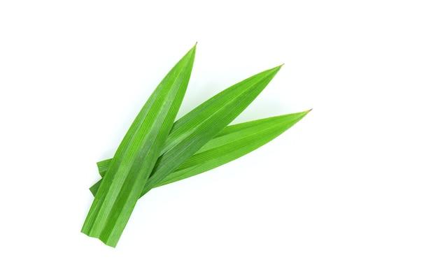 パンダンの葉またはパンダナスアマリリフォリアス緑の葉が白で分離されました。 Premium写真