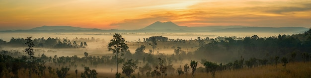 Panorama view beautiful sunrise landscape of forest Premium Photo