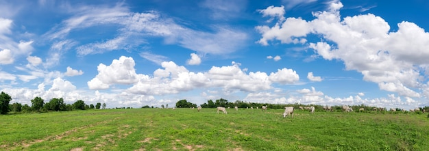 Panoramic blue sky clouds with  green field landscape for background Premium Photo