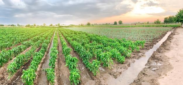農業のパノラマ写真。 Premium写真