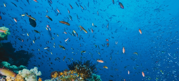 Panoramic seascape of tropical fish Free Photo