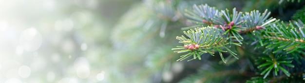 Foto panoramica di un albero di natale - perfetto per lo sfondo Foto Gratuite