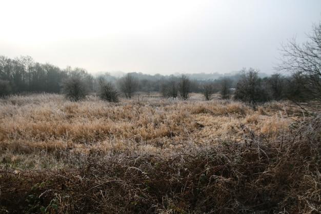 Панорамный снимок инея на траве и деревьях на поле Бесплатные Фотографии