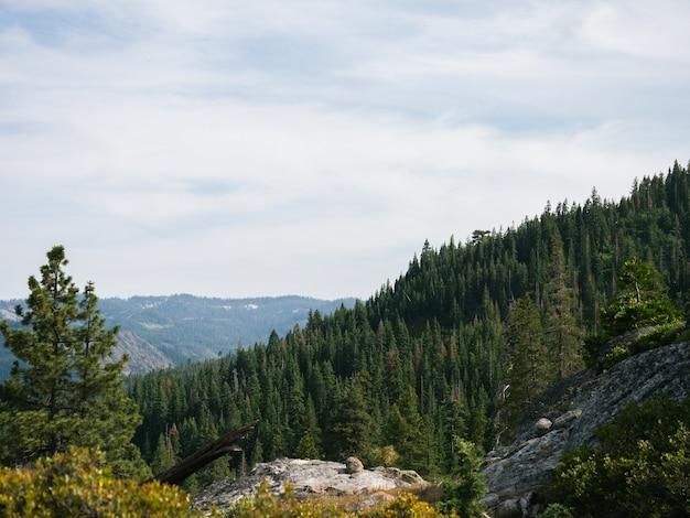 曇り空の下の斜面にある緑の松の木のパノラマ写真 無料写真