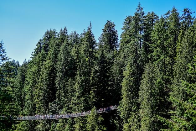Foto panoramica di persone su un ponte sospeso attraverso alberi ad alto fusto in una giornata di sole Foto Gratuite