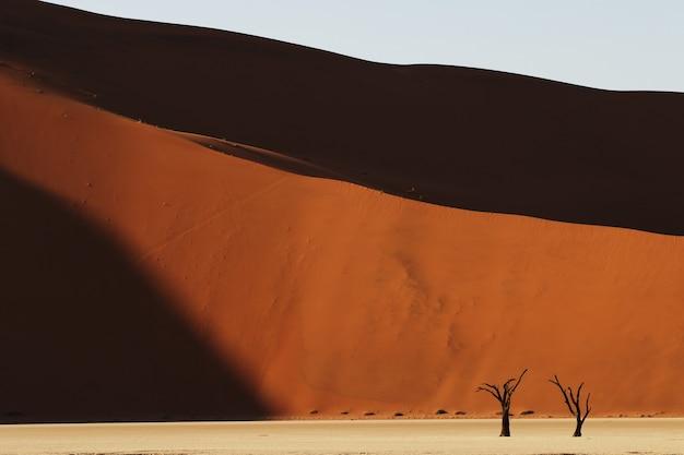 Foto panoramica di un pendio di dune di sabbia con alberi secchi alla base Foto Gratuite