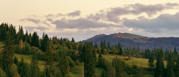 Panoramic view of carpathian mountains pine forest after sunset with cloudy sky Premium Photo