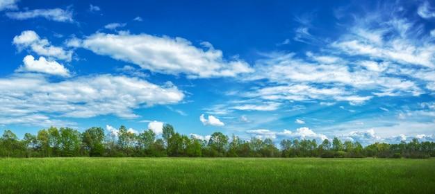 日光と曇り空の下で草や木々に覆われたフィールドのパノラマビュー 無料写真