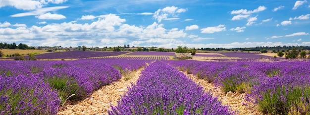Панорамный вид на лавандовое поле и облачное небо, франция Бесплатные Фотографии