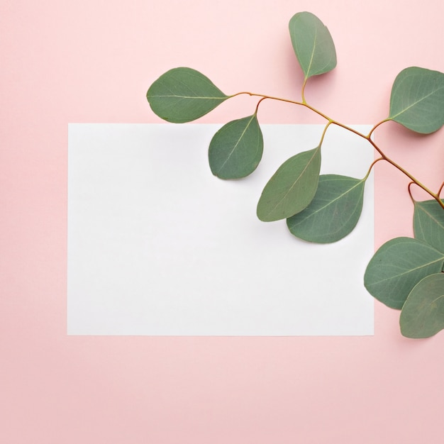 Paper blank,  eucalyptus branches on pastel pink background Premium Photo