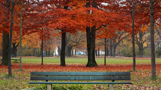 Park surrounded by colorful leaves and trees with a wooden bench during autumn Free Photo