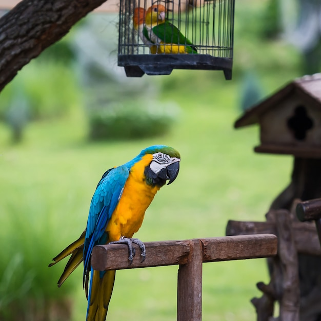 Parrot,bali. Premium Photo