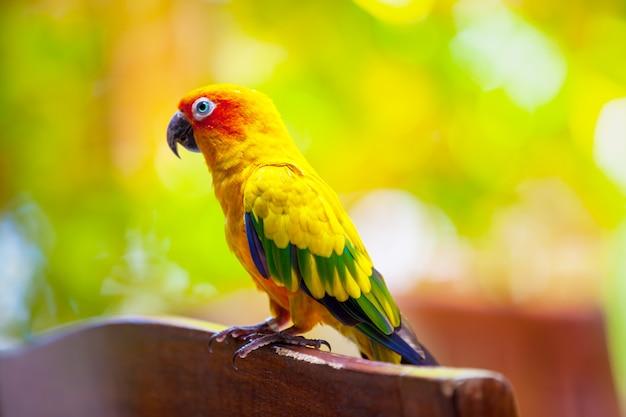 モルディブのクローズアップのオウム鳥 Premium写真