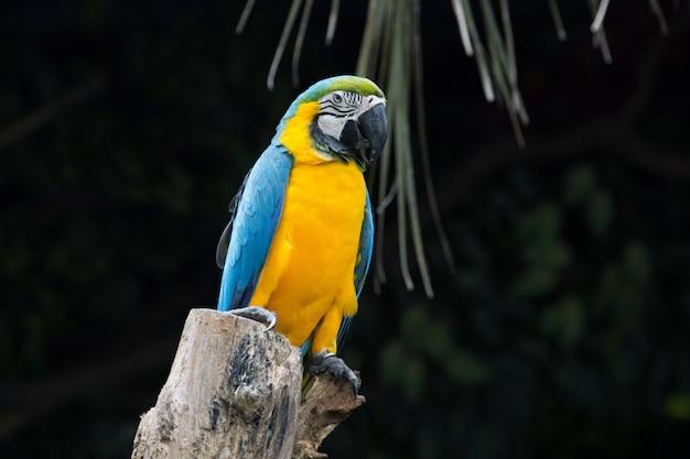 止まり木に座っているオウム鳥 Premium写真