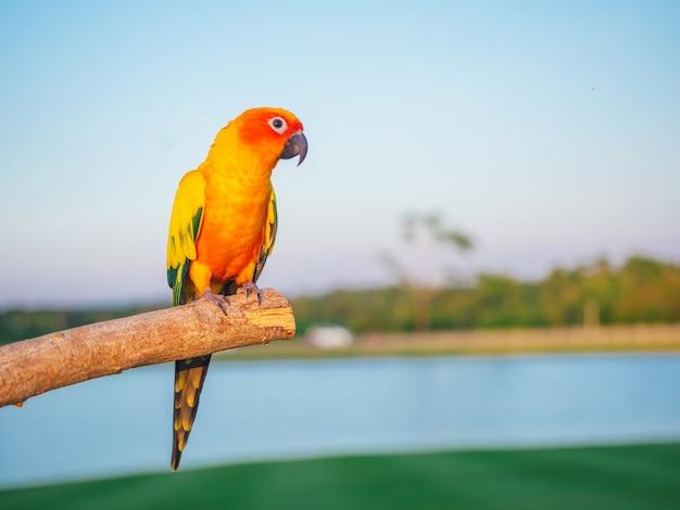 Parrot is cute exotic pet Premium Photo