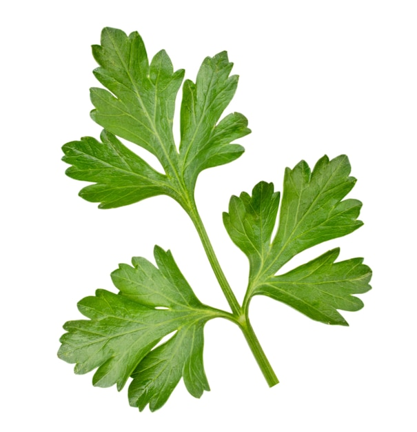 分離されたパセリの葉の詳細 Premium写真