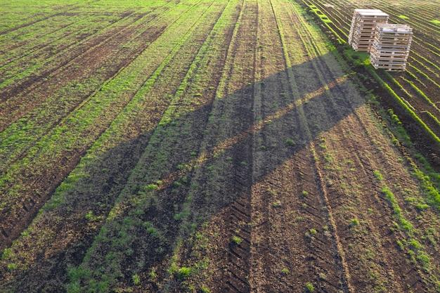 Часть питомника декоративных растений. поле для выращивания газона для продажи, для использования в ландшафтном дизайне. Premium Фотографии