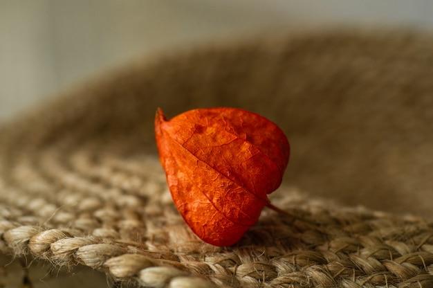Часть растения physalis peruviana, изолированные на поверхности. растение физалис. китайский фрукт. апельсин плоды физалиса. урожай физалиса Premium Фотографии