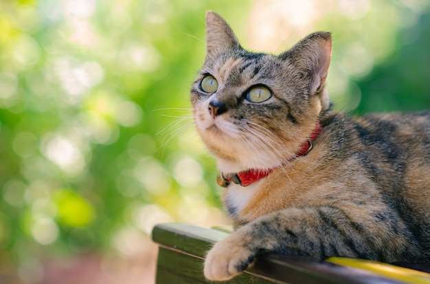 Частичное внимание очаровательной домашней кошки, сидящей на стуле с солнечным светом утром и размытым фоном. Premium Фотографии