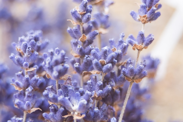 Pastel colored photo of dried lavender flowers and bouquet