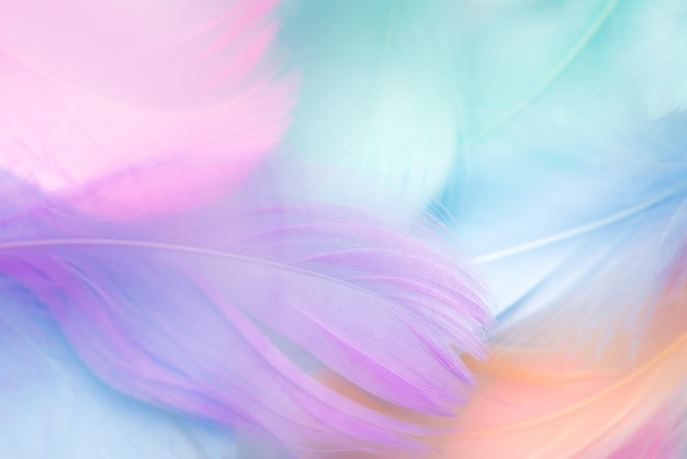 Pastel colour feather abstract background Premium Photo