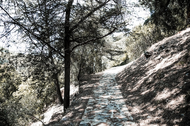 Path in forest on hill among trees in sunnyday Free Photo