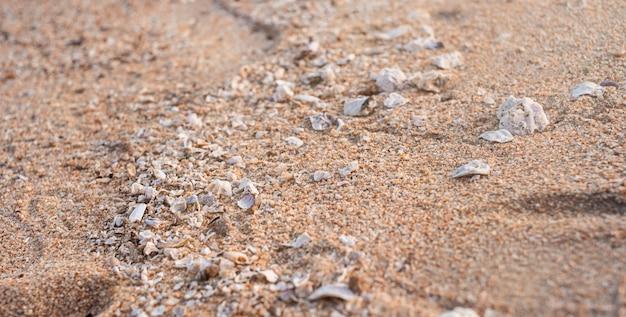 A path of small seashells leads through the sand. sunlight illuminates the path. Premium Photo