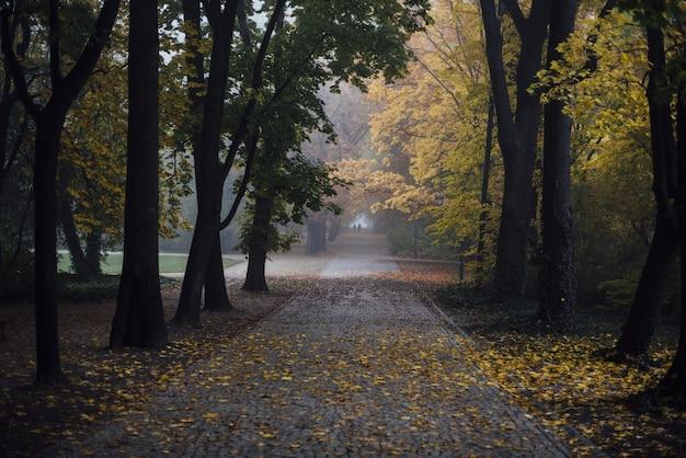 秋の公園を通る小道 無料写真