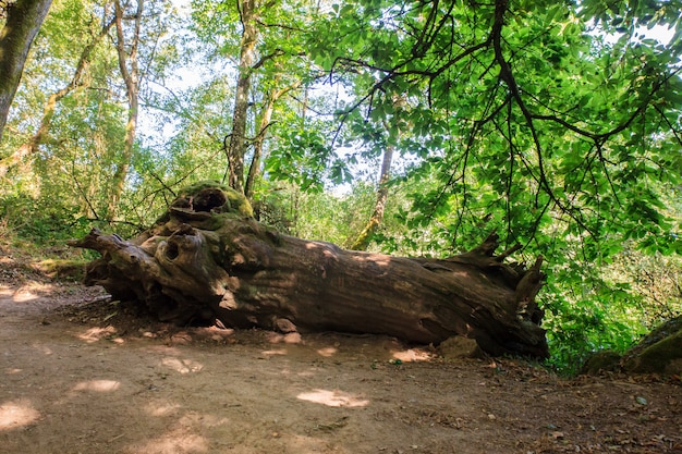 Path in the woods Premium Photo