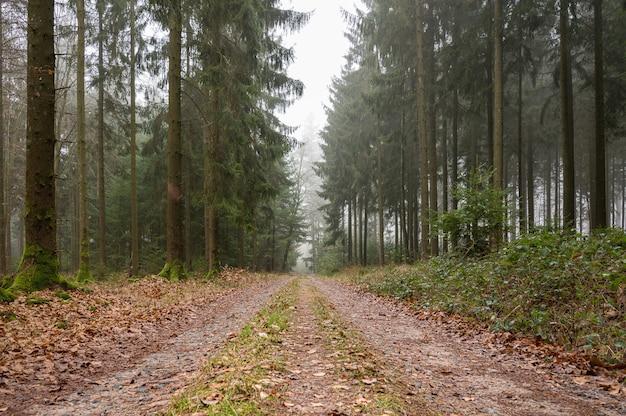 Sentiero coperto di foglie nel mezzo di una foresta con alberi verdi Foto Gratuite